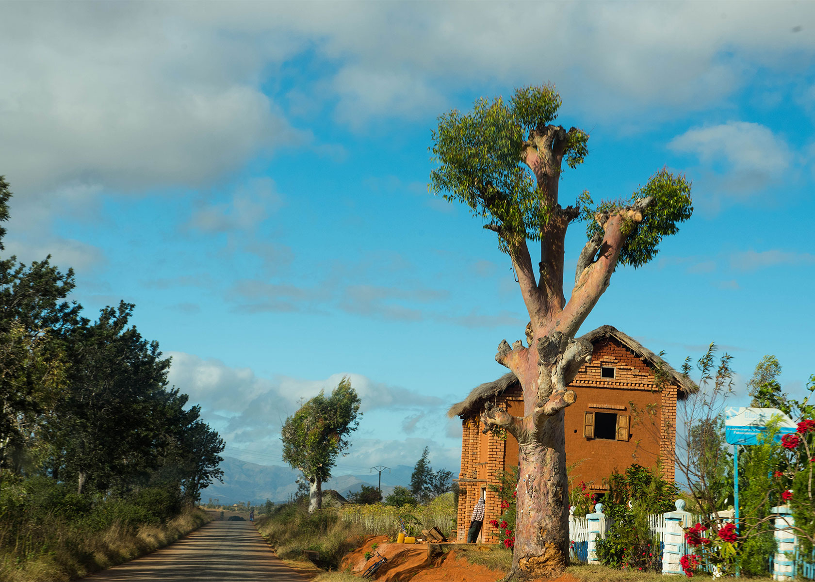 The African countryside, with its open roads and lush vegetation, photographed by Deborah Ross.