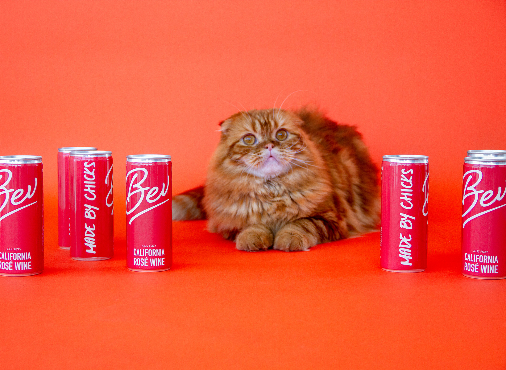 An orange cat sitting in between red cans of Bev against an orange background